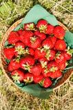 Fresas en cesta Fotografía de archivo libre de regalías