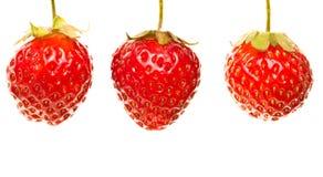 Fresas en el fondo blanco Fotos de archivo libres de regalías