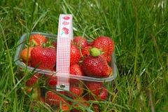 Fresas en envase, en hierba Fotos de archivo libres de regalías