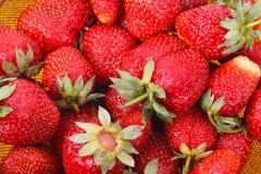 Fresas en un colador Foto de archivo