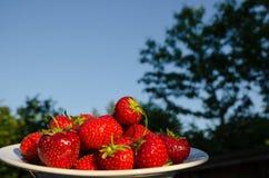 Fresas en un cuenco Foto de archivo libre de regalías