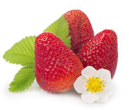 Fresas en un fondo blanco Foto de archivo