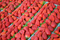 Fresas en un mercado de los granjeros imagen de archivo
