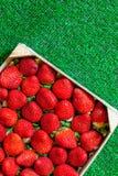 Fresas en una caja de madera en hierba Imágenes de archivo libres de regalías