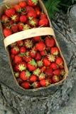 Fresas en una cesta Foto de archivo libre de regalías