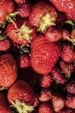 Fresas en una cesta Imagen de archivo libre de regalías