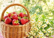 Fresas en una cesta y un ramo de manzanillas Imagen de archivo