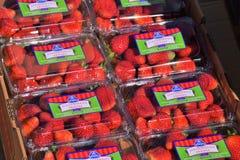 Fresas encajonadas frescas Imagen de archivo