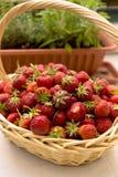 Fresas escogidas frescas en una cesta en la tabla blanca Fotografía de archivo
