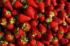 Fresas frescas Fotografía de archivo