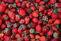 Fresas frescas Fotos de archivo