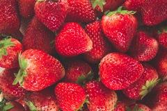 Fresas frescas Fotos de archivo libres de regalías