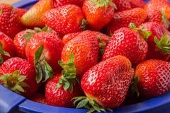 Fresas frescas del jard?n fotografía de archivo
