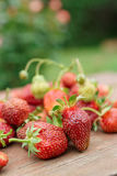 Fresas frescas en el vector de madera Imagen de archivo