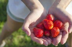 Fresas frescas en manos del ` s de la muchacha Foto de archivo libre de regalías