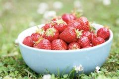 Fresas frescas en un tazón de fuente. imágenes de archivo libres de regalías