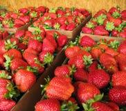 Fresas frescas exhibidas en el mercado de los granjeros foto de archivo