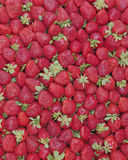 Fresas frescas para la venta Foto de archivo