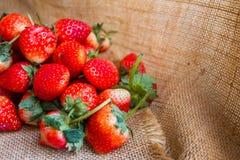 Fresas frescas que se despliegan en un saco como fondo Foto de archivo libre de regalías