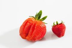 Fresas, grande y pequeño Imágenes de archivo libres de regalías