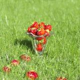 Fresas jugosas rojas en vidrio en hierba Foto de archivo libre de regalías