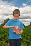 Fresas lindas de la cosecha del muchacho en campo, al aire libre Fotos de archivo libres de regalías