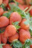 Fresas maduras Fotografía de archivo libre de regalías