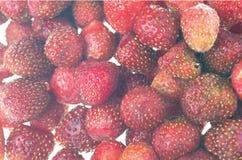 Fresas maduras aisladas como abackground Imagen de archivo libre de regalías