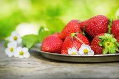 Fresas maduras dulces perfectas en fondo de madera Imagen de archivo libre de regalías