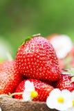 Fresas maduras dulces perfectas en fondo de madera Fotografía de archivo