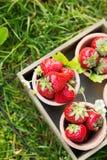 Fresas maduras dulces perfectas en fondo de madera Fotografía de archivo libre de regalías