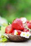 Fresas maduras dulces perfectas en fondo de madera Imagen de archivo