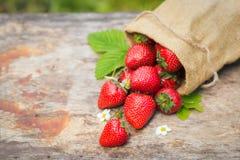 Fresas maduras dulces perfectas en fondo de madera Fotos de archivo libres de regalías