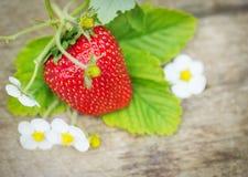 Fresas maduras dulces perfectas en la madera Foto de archivo libre de regalías