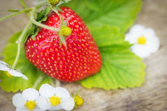 Fresas maduras dulces perfectas en la madera Foto de archivo