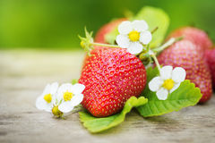 Fresas maduras dulces perfectas en la madera Imagen de archivo