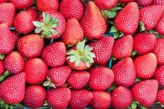 Fresas maduras frescas Imagen de archivo libre de regalías