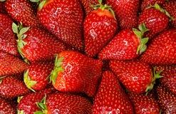 Fresas maduras frescas Imagenes de archivo
