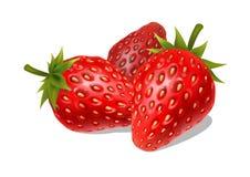 Fresas maduras frescas en un fondo blanco Foto de archivo