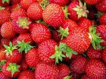 Fresas maduras rojas Imagen de archivo