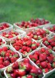 Fresas: opinión del Perro-ojo Foto de archivo libre de regalías