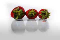 Fresas orgánicas en un fondo blanco Imagen de archivo