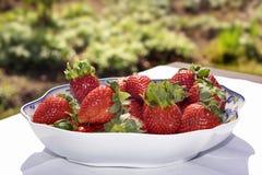 Fresas perfectas en un tazón de fuente blanco Foto de archivo libre de regalías
