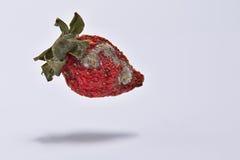 Fresas putrefactas fotos de archivo