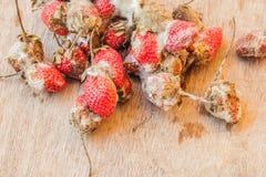 Fresas putrefactas fotografía de archivo libre de regalías