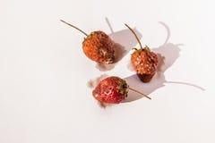 Fresas putrefactas imagen de archivo libre de regalías