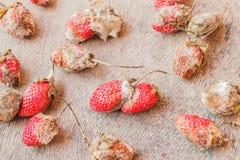 Fresas putrefactas imagenes de archivo