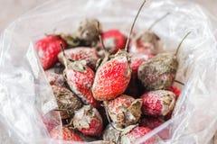 Fresas putrefactas imágenes de archivo libres de regalías