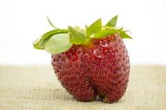 Fresas rojas Imagen de archivo
