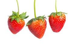 Fresas rojas en el fondo blanco Imágenes de archivo libres de regalías